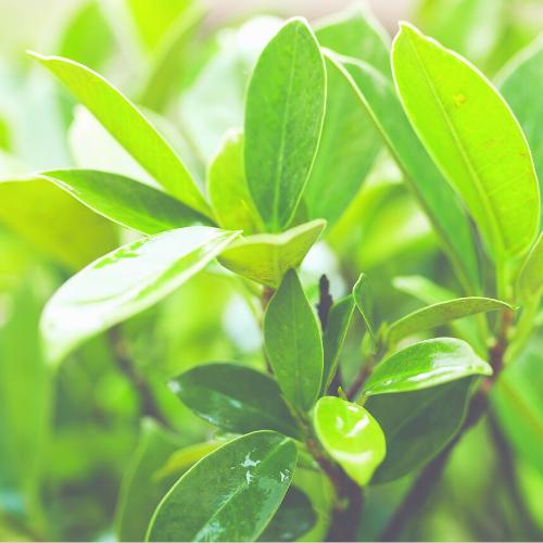 green-foliage